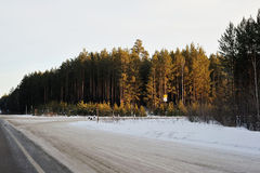 Road and trees in Russia. View on the road near the forest in winter Stock Photos