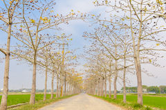 View of a road with trees Royalty Free Stock Photography