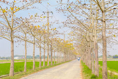 View of a road with trees Royalty Free Stock Photos