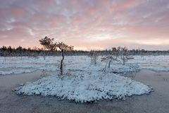 Winter sunset on a mire. View from a roadside mire during winter sunset in Northern Finland Stock Image