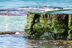 Close up of a rock covered in emerald coloured seaweed at low tide stock photo