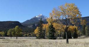 View of rocky mountain with aspen in fall 4K. A View of rocky mountain with aspen in fall 4K stock footage