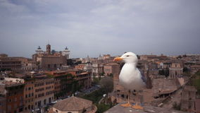 View of Rome City with a seagull. Italy stock video footage