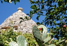 View of roof of traditional trulli house in the Aia Piccola residential area of Alberobello in the Itria Valley, Puglia Italy. Cacti in foreground stock photography