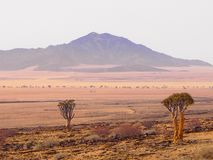 Scenic view of Rostock Mountains Namibia with two quiver trees foreground. View of Rostock Mountains with two quiver trees in foreground. The landscape is stock photos