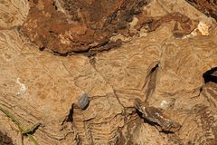ROCK WITH STRIATED PATTERNS AND CURVED LINES. View of rough brown rock with curved ridges and layered striations Stock Photography