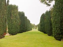 View of row of conifer trees leading to a small statue fountain royalty free stock photography