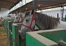View at row of horses in stable Stock Photos