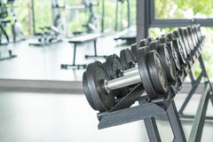 View of rows of dumbbells. On a rack in a gym Stock Photography