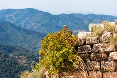 View of the ruins of the castle of Siuran, Tarragona, Catalunya, Spain. Close-up. Stock Photo