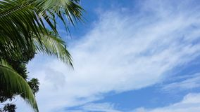 Green palm tree leaves with blue skies. View of rustling palm tree leaves motion in the wind on sunny day in tropics stock video footage
