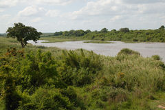 View of the Sabie river, Kruger National Park, South Africa Stock Image