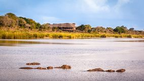 View of the Sabie Sand River Royalty Free Stock Photos