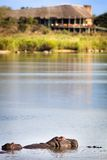 View of the Sabie Sand River Stock Photography