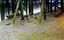 View Saltwater Pilings Stock Photos