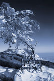 VIEW ON SAN MARINO. View on rock and frozen tree in San Marino. Monochrome in blue tones royalty free stock image