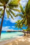 View of the sandy beach with palm trees, Bora Bora, French Polynesia. Vertical