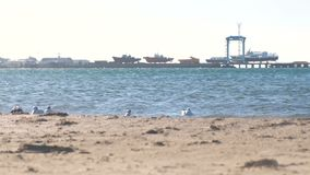 View of the sandy beach with seagulls and the seaport with boats on the pier. stock video