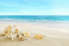 Tropical beach. Shells on the sand. royalty free stock images