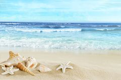 A view of the beach with shells in the sand. View of the sandy beach. Shells and starfish on the sand royalty free stock photos
