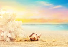 The view on sandy beach. The view on sandy beach with coral, seashell and starfish. Summer beach concept Stock Photo
