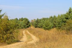 Sandy road in pine forest Stock Photography