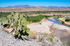 View from Santa Elena Canyon in Big Bend National Park. Desert, cactus and the Rio Grande viewed from Santa Elena Canyon in afternoon light Royalty Free Stock Photos