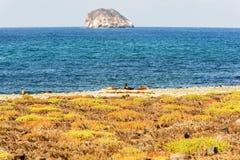View from Santa Fe island Stock Photos