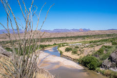 View from Santa Helena Canyon of Big Bend National Park. Ochotillo Bush frames the Rio Grande River and desert at Santa Helena Canyon in Big Bend National Park Royalty Free Stock Photo