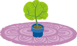 The view of sapling Stock Image