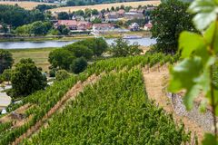 View from a Saxon vineyard on the Elbe stock photography