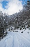 View on scenic winter snowy pine tree forest way in julian alps, slovenia Stock Photography
