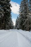 View on scenic winter snowy pine tree forest way in julian alps, slovenia Stock Photo
