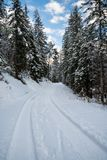 View on scenic winter snowy pine tree forest way in julian alps, slovenia Royalty Free Stock Photography