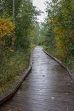 Scenic wooden hiking trail in deep woods with Autumn colored leaves stock photo
