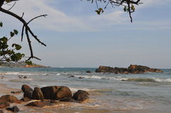 A view of a sea beach with stones and tree branches Royalty Free Stock Photo