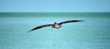 View of sea bird Stock Photo