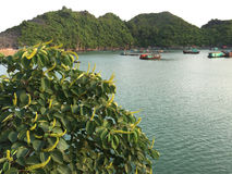 View of the sea in Cat Ba island, Vietnam Royalty Free Stock Images