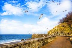 View of the sea coast flying birds in San Sebastian. Spain. Royalty Free Stock Image