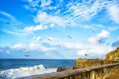 View of the sea coast flying birds in San Sebastian. Royalty Free Stock Photos
