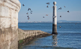 View of the sea embankment. A flock of birds in the sky. Gulls fly in the sky Stock Image