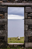 View of sea, pastures and lamb from a stone door of an old ruin Royalty Free Stock Images