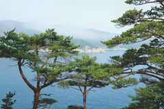 View on a sea through pine branches on the rock. View from above stock photography