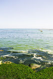 View of the sea. With some seaweed Stock Image