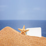 A view of a sea star Stock Photo