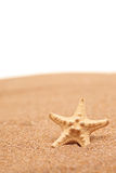 A view of a sea star on a sandy beach Royalty Free Stock Photos