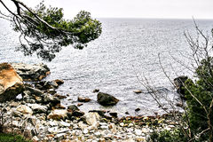 View of the sea, stony shore, through the pines.  stock image
