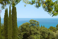 View of the sea through the trees. View of the Black Sea through the trees in the park of Livadia Palace stock photography