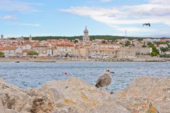 Seagull view Royalty Free Stock Photo