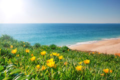 View seascape with yellow flowers and grass. Royalty Free Stock Photography